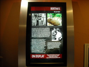 Bertha's Burglary Display at the Mob Attraction at the Tropicana in Las Vegas.