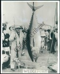 "Tony Accardo with his trophy catch a ""Big Tuna."""